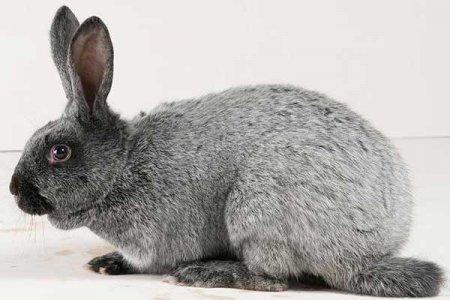 Клетчатка в комбикорме для кроликов