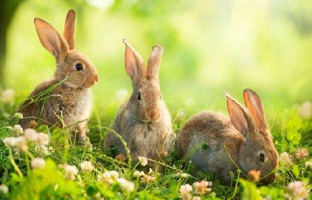 Комбикорм для кроликов. Нормы потребления.